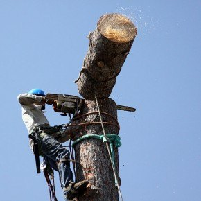 Removing a Tree from your Property