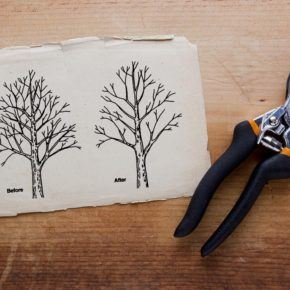 Pruning shears next to a before and after tree pruning diagram