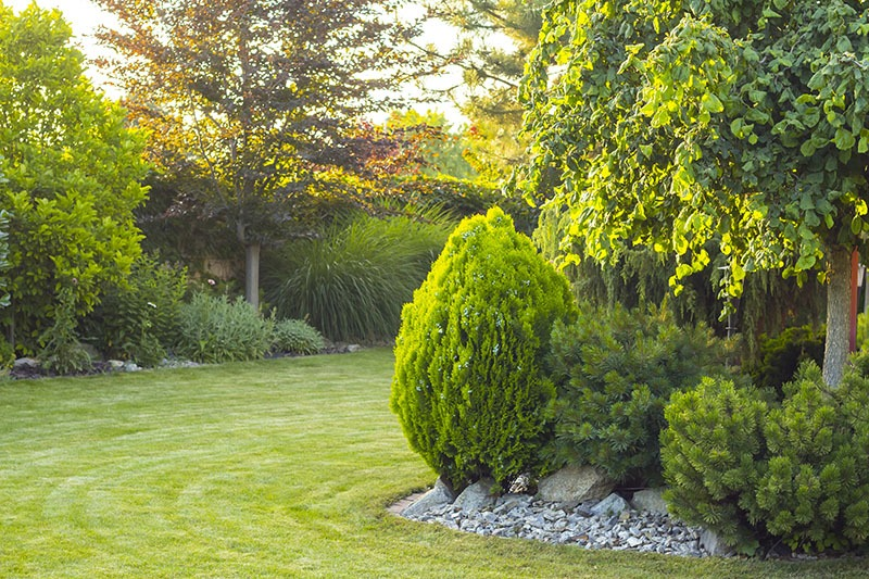3 Tips For Designing A Beautiful Landscape With Trees Vintage